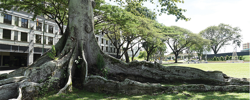 KUCHING'S TREES OF LIFE